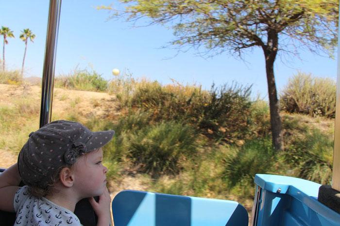 San Diego Zoo Safari Park - Travel California With a Baby