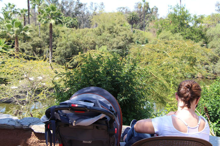 San Diego Zoo with toddler and baby
