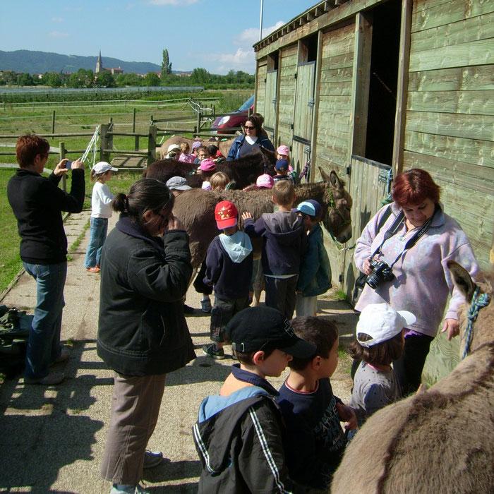 journée pédagogique, le pansage des ânes