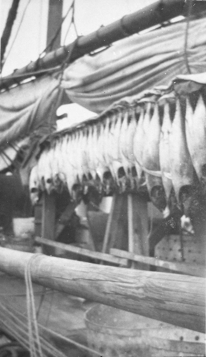 «  Séchage du poisson, le poisson est suspendu à des traverses portées par des chevalets »