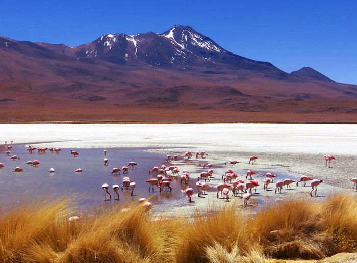 An der malerischen Laguna Hedionda gibt es tausende Flamingos.