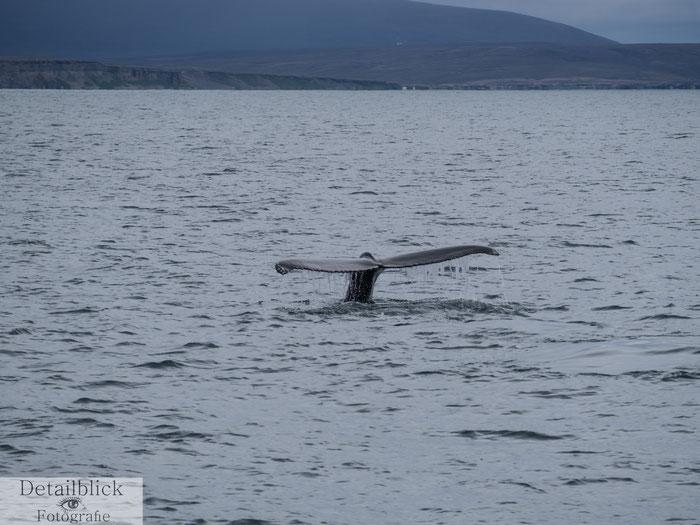 Schwanzflosse  eines Wals