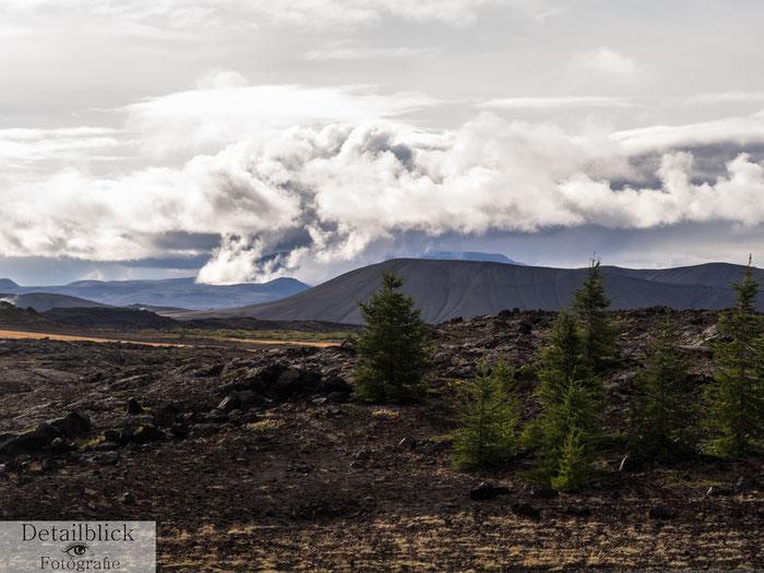 Berge und Tannen im Mývatn-Gebiet