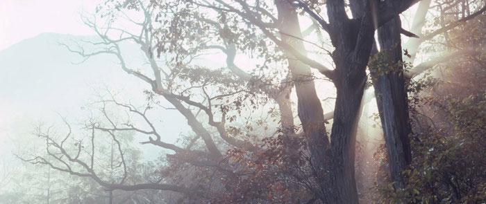 Bosco con raggi del sole che penetrano gli alberi