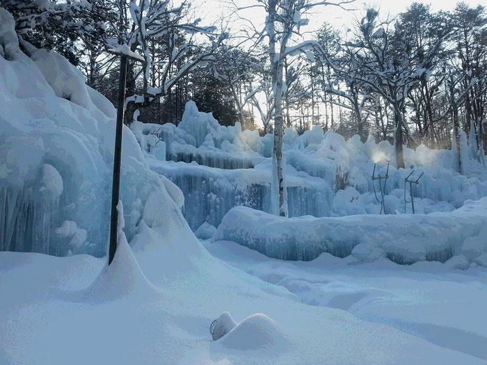 本日の氷点下の森の様子