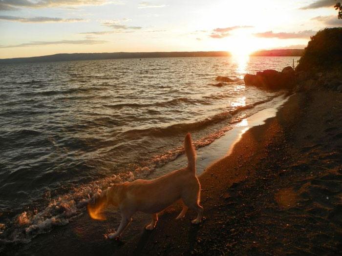 Schnell noch ins Wasser, Emma glaubt noch immer, es ist Salzwasser. Heute schlafen wir sicher gut.