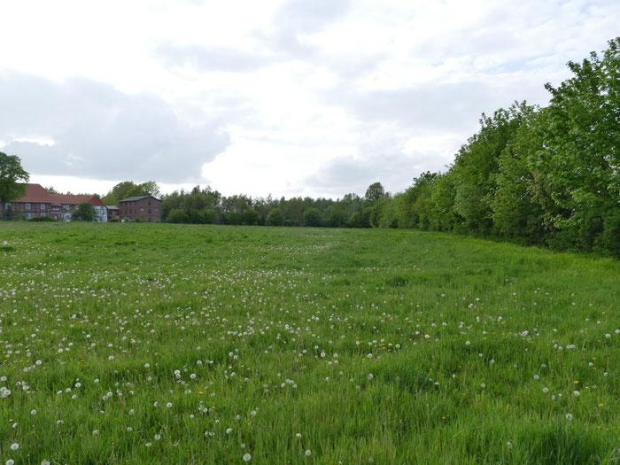 Weide mit Blick in Richtung der Bundesstraße B444 und der Ilseder Mühle