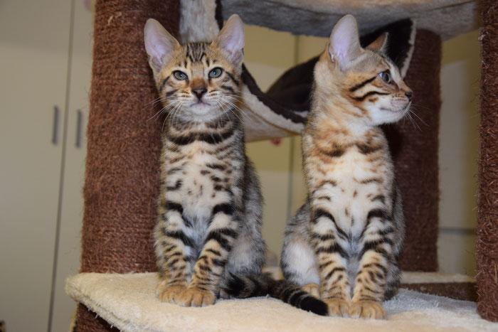 Bao (links) und Bayu, 10. Woche.
