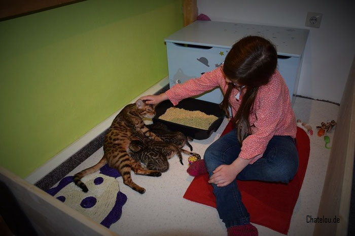 Unsere 8. jährige Tochter Enora bei Esiah und ihren Kitten