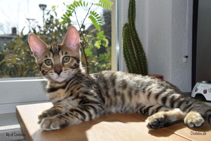 Aiji, 12 Wochen alt