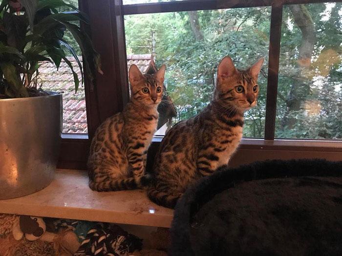 Bayu und Bao in ihrem neuen Zuhause.