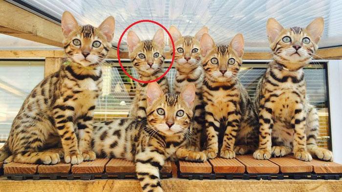 Esiah und ihre Geschwister bei ihren Züchtern