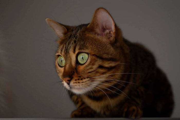 Aela wird 4 Jahre alt im Januar 2020. Ihre riesengroßen, grünen Augen sind definitiv ihr Markenzeichen!