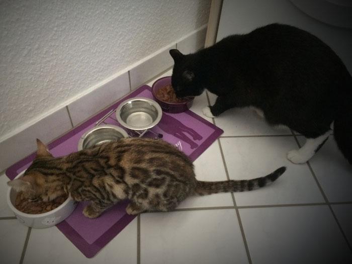 April 2016. Gemeinsames Essen mit ihrer neuen Katzenschwester Chloé.