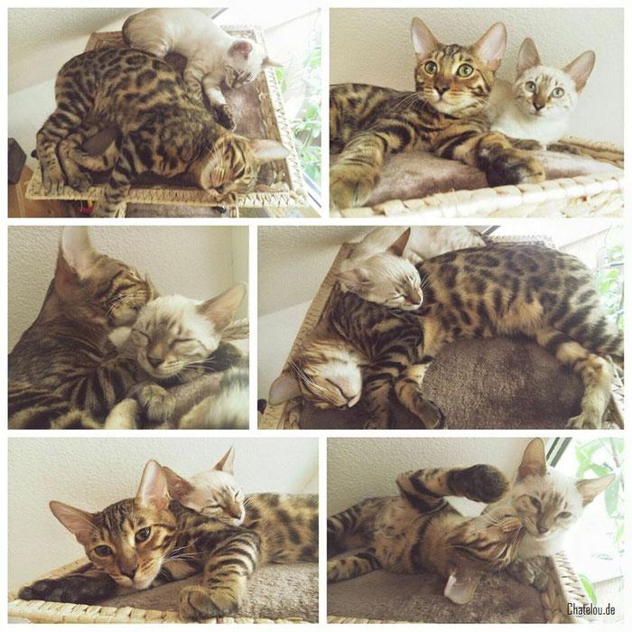 August 2016, Balin und seine neue Schwester Eowyn.
