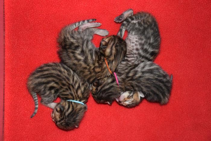 Bayu, links auf dem Bild, 3 Tage alt.