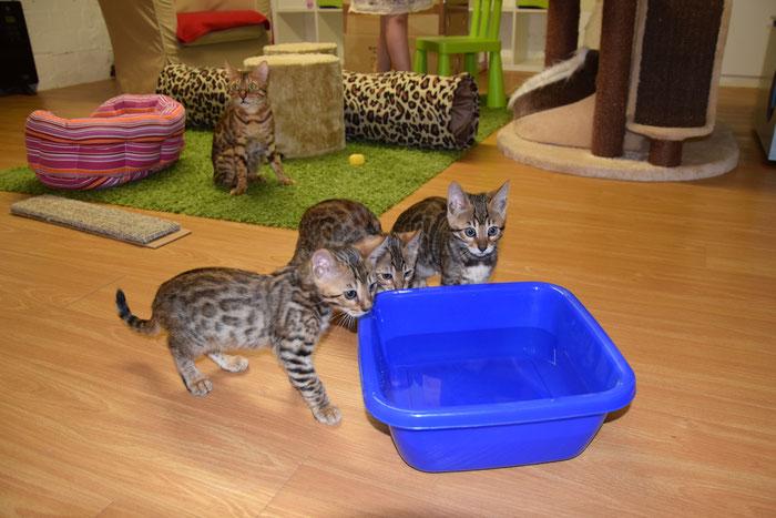 Banou (rechts), 10. Woche, mit ihren Brüdern.