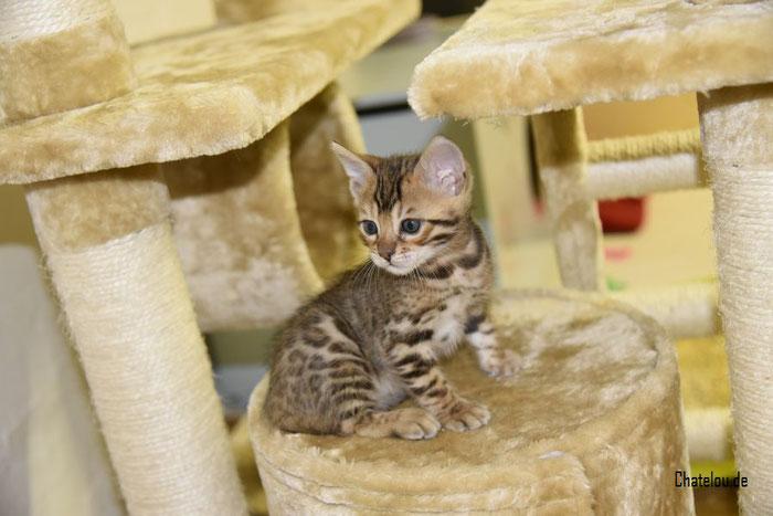 Unsere A-Kitten haben jetzt ihren Baby-Kratzbaum und klettern so gern !