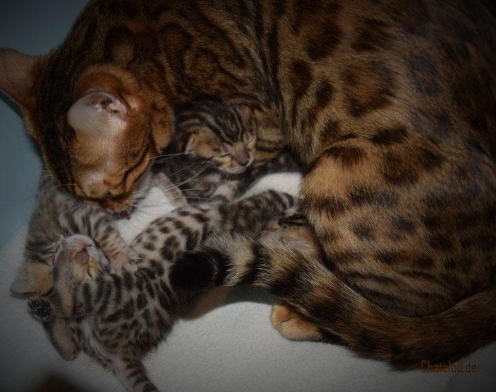 Mama Esiah und ihre 15 Tage alten Babys