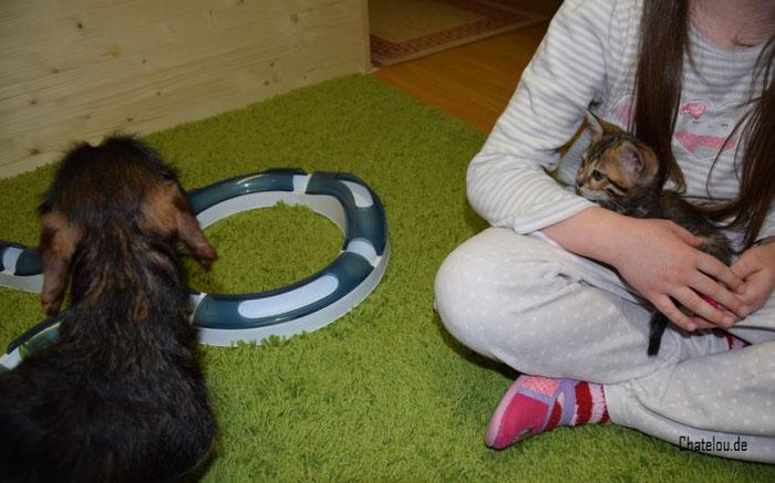 7 Wochen alt - Aela lernt unseren Dackel Yuna besser kennen