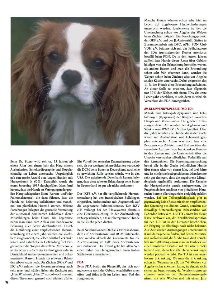 Herzerkrankungen beim Labrador Retriever