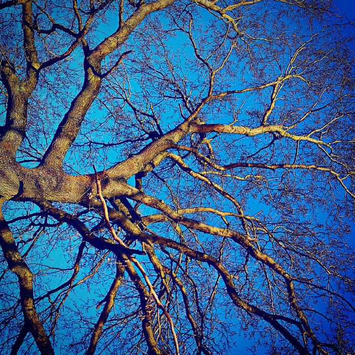 Winterhimmel (bearbeitet mit Instagram)