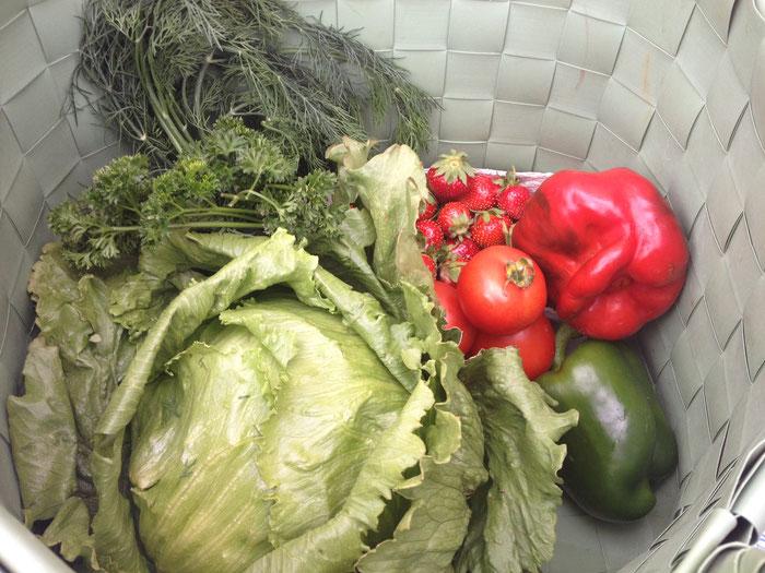 Salat und Gemüse in Hülle und Fülle - das heimische Obstangebot derzeit überschaubar.