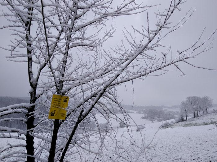 Rundwanderung durch den Winterwald hinter Groß-Umstadt