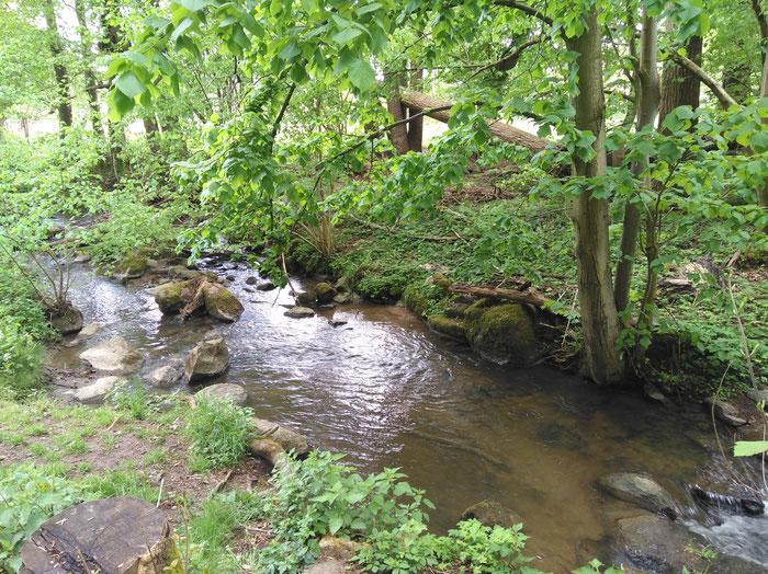 Immer am Ufer der Modau entlang schlängelt sich der schattige Weg in Richtug Hoxhohl.