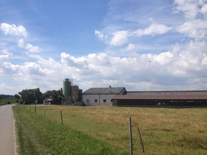 Zuerst waren die Kühe noch auf der Wiese, dann haben sie sich in den schattigen Stall zurück gezogen - wollen wohl nicht aufs Bild......