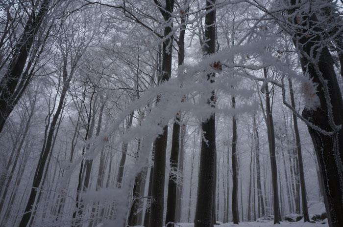 Der Frost hat die Äste mit Schneekristallen verziert: kleine Kunstwerke der Natur am Wegesrand.