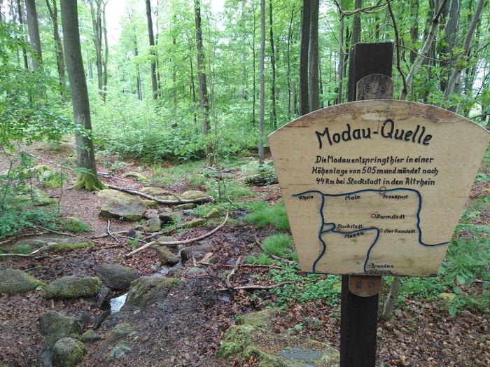 Die Modau entspringt noch ganz klein und bescheiden im Wald unterhalb der Neunkircher Höhe.