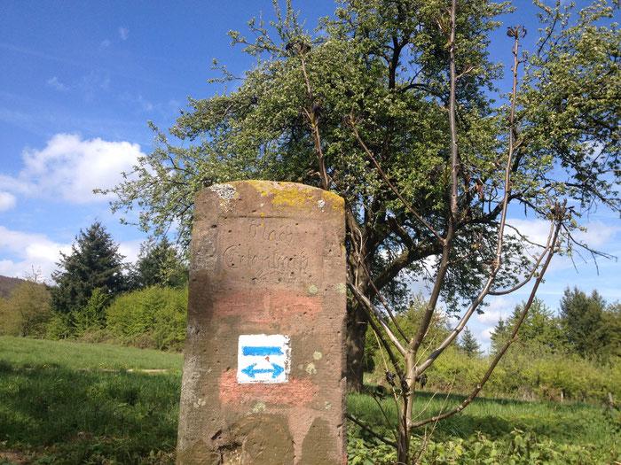 """Die Wegmarkierung """"blauer Querbalken"""" begleitet uns bis nach Erlenbach."""