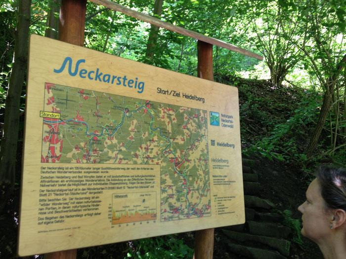 Übersichtstafeln und durchgängige Beschilderung machen das Wandern auf dem Neckarsteig zu einem echten Vergnügen.