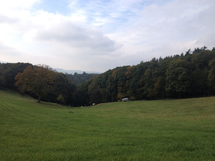 Hinter der Ortschaft Böllstein schlängelt sich der Radweg über die Wiesen (©odenwaldlust.de)