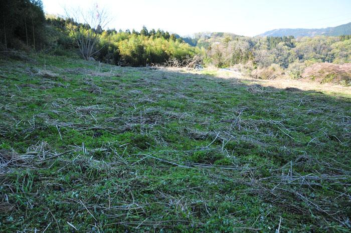 すどう農園の中で一番はずれの、いちばん広い畑です。