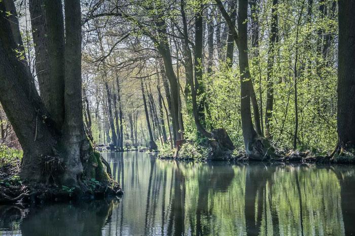 Spreewald Landschaft Kahnfahrten Wendland