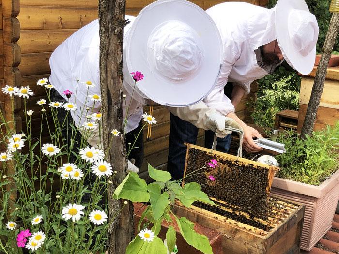 Imker, Nachhaltigkeit, Bienen, Bienen pflegen, Imkerei