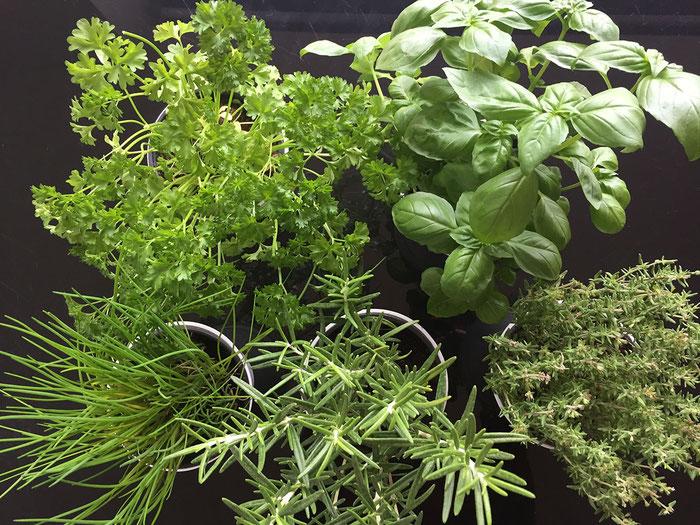 Kräutergarten anpflanzen
