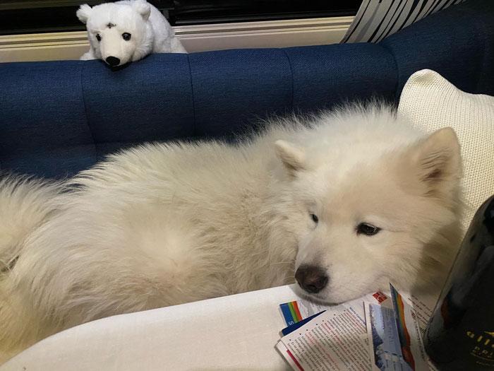 auch der Hund geniesst den Kurzurlaub