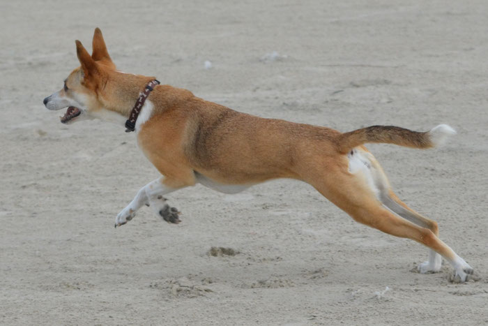 Hond uit het buitenland hondentraining