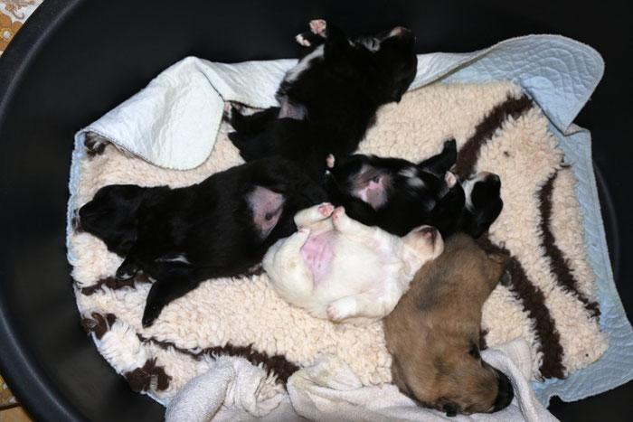 zweiter Wurf: Jitoni, Jiotto, Jenola, Jenika und Jasta
