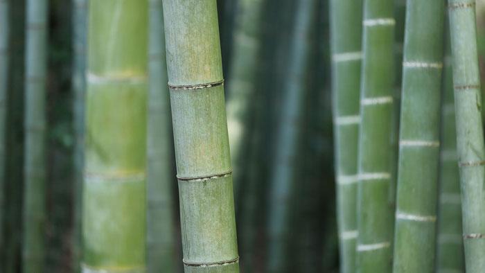 Fondo con cañas de bambú para una página web.