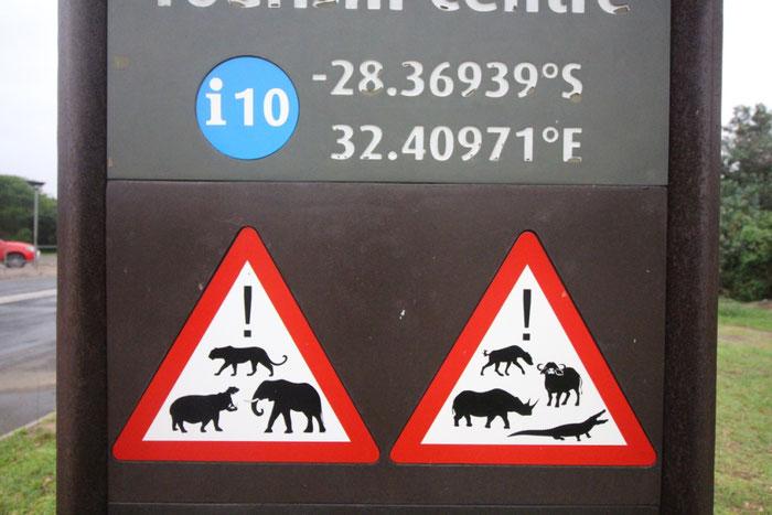 Südafrika, Roadtrip, Auto, Afrika, Tiere,Gefahr, Weltreise, Straßen, Travel