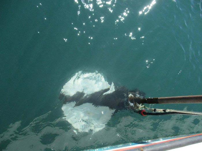 Le sondeur de sédiments à poste sous le bateau. Il sert à cerner la stratigraphie des sédiments marins.