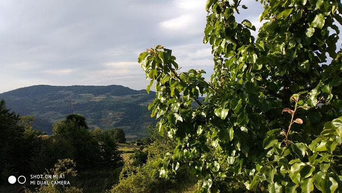 Alla scoperta del territorio con BLABLATRAIL domenica 11 agosto con tappa  a Buzzetti da Woods Azienda Agricola