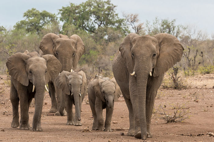 Africa Trips & Tours - Safari & The Big 5