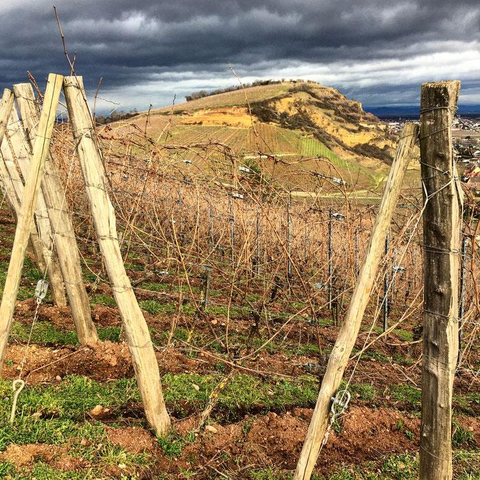 En Alsace, la diversité des roches et des sols est une des plus complexe au monde ...une balade autour de Turckheim nous aidera à comprendre les vins marqués par leur terroir (vue du Brand vers le Heimbourg) - une parcelle du Domaine Zind-Humbrecht