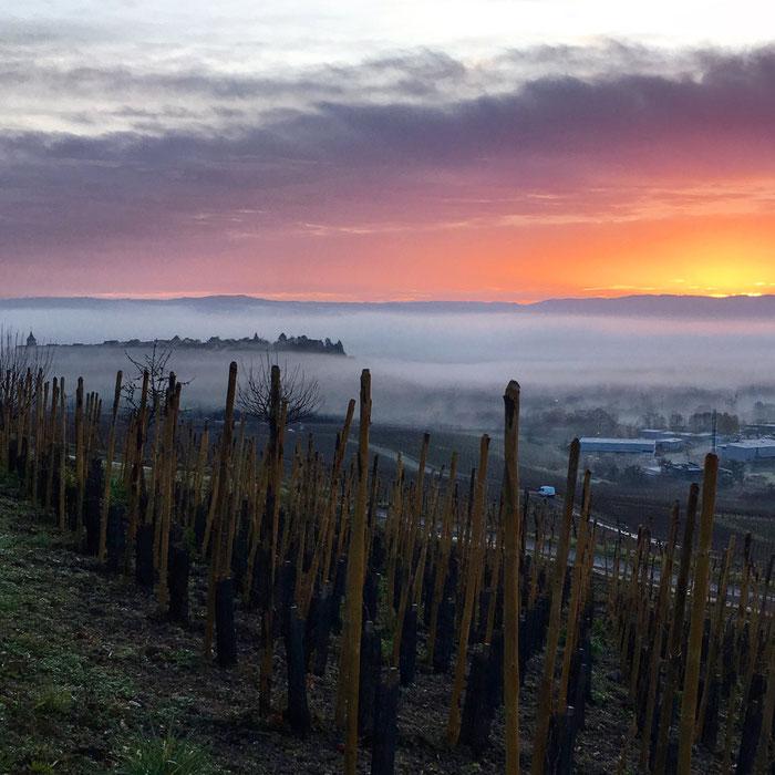 """Forte densité du Terroir : entre Riquewihr et Zellenberg, la """"belle colline"""" devient plus intense - Grand Cru Schoenenbourg - Parcelle du Domaine Trapet-Alsace"""
