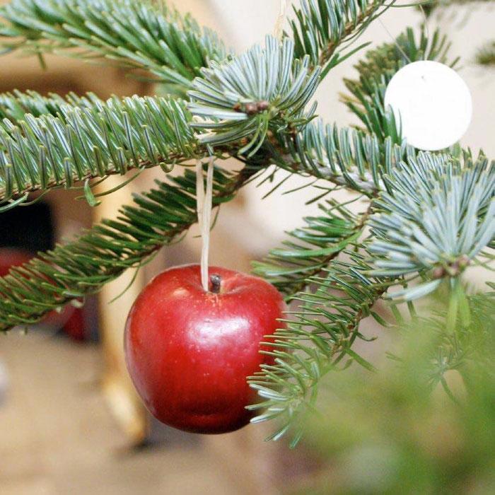 """Sapin décoré avec des hosties et des pommes """"Christkindel"""" ou """"Saint Nicolas"""".  Cette ancienne variété de pomme est d'origine alsacienne,  petite, rouge foncé, elle devient brillante lorsqu'elle est frottée."""